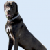 Breed Profile – Cane Corso
