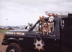 Search and Rescue Pit Bulls