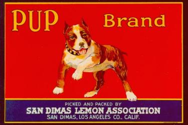 Pup Brand with Pitbull Mascot