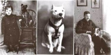 Vintage Images of Pit Bull Dogs