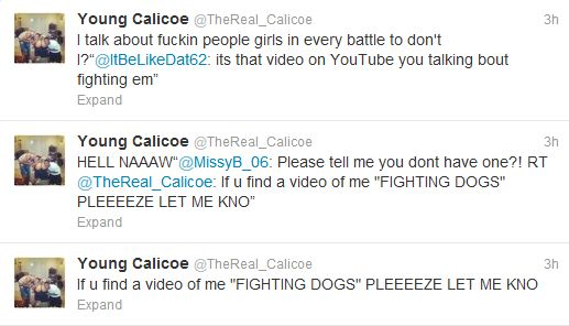 is calicoe dog fighting?
